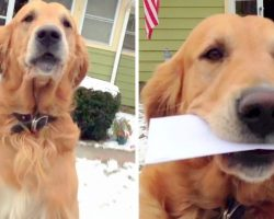 Dog's Childhood Dream Was To Be A Mailman One Day, His Dream Finally Came True
