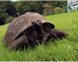 Meet The Oldest Known Living Animal, Born Before The Lightbulb Was Invented
