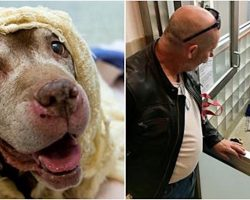 They Feared 18-Year-Old Dog Wouldn't Find A Home, Then Prince Charming Showed Up