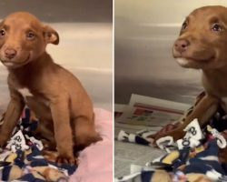Tiny Stray Pup Was Rescued From A Busy Street, And Now She's All Smiles