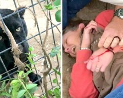 Woman Tries To Take Selfie With Jaguar, Gets Attacked And Then Blames The Zoo