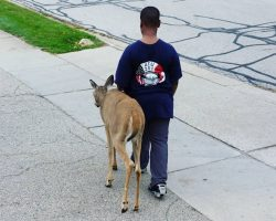 Curious Neighbor Spots 10-Yr-Old With Blind Deer, Then Recognizes Their Daily Routine & His Heart Melts