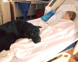 Service Dog Saves Diabetic Boy's Life, Alerts Mom Of Danger Before It's Too Late