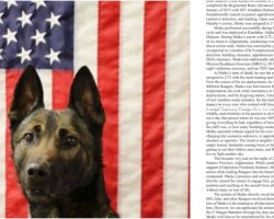 Military Dog Sacrifices His Own Life To Save The Army Rangers He Loved