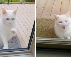 Friendly Cat Visits Neighbor's Home Every day, But Her Motive Is Just Too Sweet