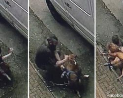 Man walking dog suddenly stops to brutalize her, unaware he is being recorded