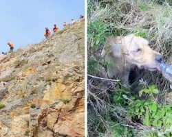 Golden Retriever Falls 15 Ft Down A Cliff, Coast Guards Risk Own Lives To Help