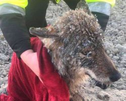 Men rescue frozen dog from icy water only to learn their huge mistake upon arriving to vet