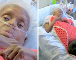 Dog Senses The Sickest Elderly In A Hospital, Cuddles With Them Before They Die