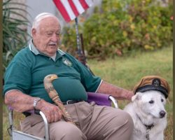Veteran found out senior dog was days from euthanization & begs to bring him home