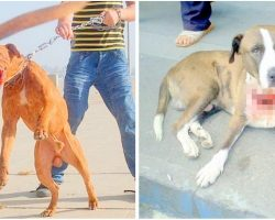 Law Proposed To Make Animal Abuse A Federal Felony, Proposes 7 Yrs Prison Time