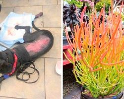 Two Dogs Almost Die After Touching Toxic Plant Commonly Found In Many Yards