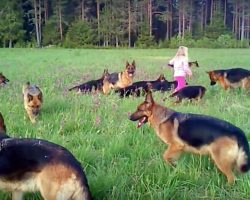 Little Girl Plays With 14 German Shepherds – Proves To Be A Natural Dog Whisperer