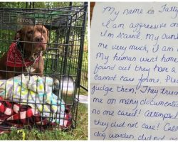 Pit Bull Left Outside Vet's Office With Heartbreaking Letter Attached