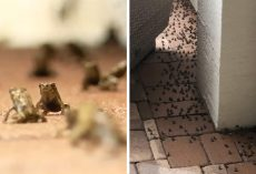 Thousands Of Tiny, Pet-Killing Toads Are Invading A Florida Neighborhood