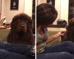 Dog Isn't Having Mom's Apologies, But Then He Finally Cracks