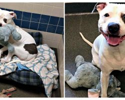 Dog Was Lonely In Shelter After House Fire, Until He Found Stuffed Elephant Best Friend