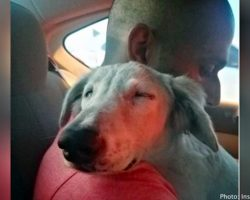 Stray dog fell asleep with his head on his rescuer's shoulder once he realized he was safe