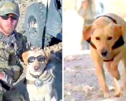 Terrorists Put Bounty On Military Dog's Head, Now A Woman Races To Bring Her Home