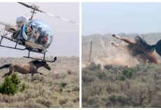 Terrified Wild Horses Are Being Chased By Helicopters That Hover Just Above Their Heads