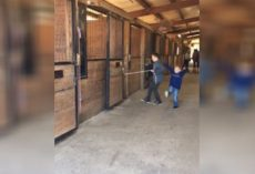 The Stubborn Horse Won't Come Out Of The Stall For This Lad But People Laugh When He Does