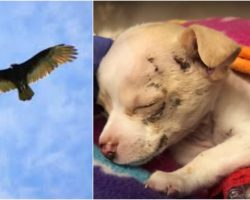 They Heard Cries From Above Just As Hawk Released A Tiny Puppy From Its Talons