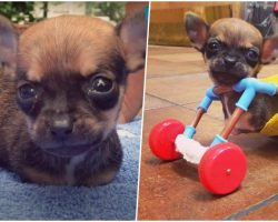 Breeder Dumped Him For Having 2 Legs But His New Mom Swears He Has Super Powers