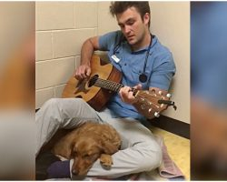 Dog Is Nervous Before Surgery, So Vet Sings Her A Song To Help Ease Her Anxiety