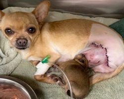 Dog Hit By Car While In Labor Survives, Incredibly Gives Birth To Healthy Puppy