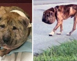 An Evil Person Abused And Deformed Him But After Surgery, This Dog Is Unrecognizable