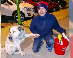 A Bolivian man found a way to save stray dogs from hunger, and we can do this in every city for free