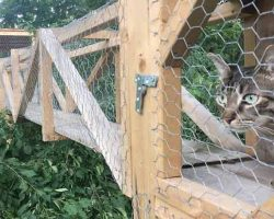 Cat Dad Builds Epic Tree House To Keep His Indoor Cats Safe