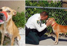 Sheriff's Office Adopts Dog Who Was Found With Electrical Tape Around His Snout