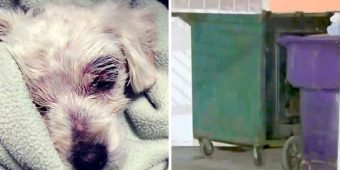 Dog Tied, Beaten Up & Left To Die In Dumpster, $20000 Reward Set For Any Info