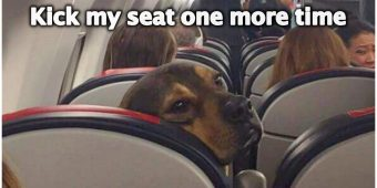 Guy Asks For Captions For Photo Of Dog On Airplane, Replies Are Hysterical
