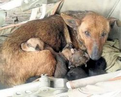 Woman Hears Crying, Finds Newborn Human Baby Tucked In Between Litter Of Stray's Pups