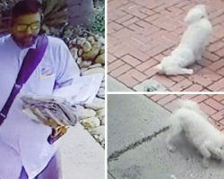 Dog writhes in pain – when owner checks surveillance camera & sees run-in with mailman