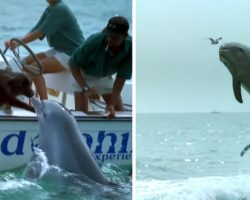 Playful dolphin jumps out of water to kiss dog then does a little happy dance