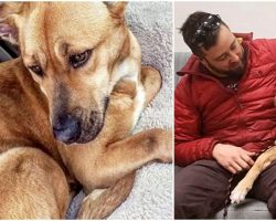 Man Finds Sick Dog While Hiking – A Month Later, Decides He Can't Live Without Her