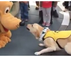 Guide Dog's Reaction To Meeting Pluto Is The Best Thing You'll See All Week