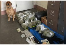 Good Dog K9 Makes Massive Drug Bust & She Couldn't Be Prouder