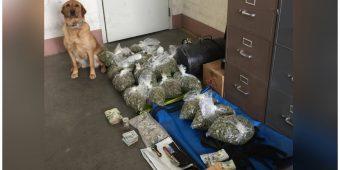 Good Dog K9 Makes Massive Drug Bust & She Couldn't Be Prouder