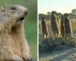 This might be the funniest animal video compilation that we've ever seen!