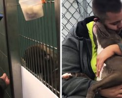 Man Drives Thousands Of Miles To Save Loving Pit Bull Scheduled To Be Euthanized