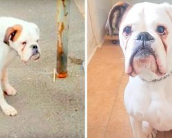 His Owner Chained Him To A Lamppost And Took Off, He Kept Waiting With Sad Eyes