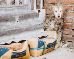 Neglected Husky Sat Frozen In Fear In A Corner Refuses To Move Until Rescuers Arrive