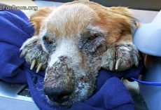 Ailing Homeless Dog Closed His Eyes, Knowing He Was Finally Safe For First Time