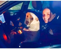 Police Officer Responds To Aggressive Dog Call, Winds Up With A Fast Friend