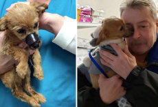 Puppy Found In Ditch With Muzzle Taped Shut Thanks The Man Who Saved Him