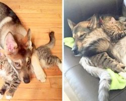 Mom Lets Puppy Pick Her New Sister At Shelter, Puppy Ends Up Choosing A Kitten